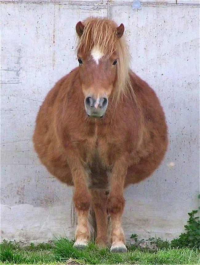 animales_embarazados_1