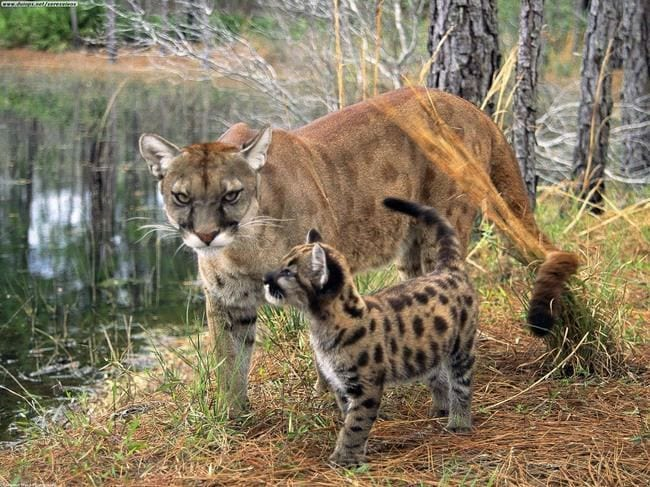 animales_peligro_extincion_31