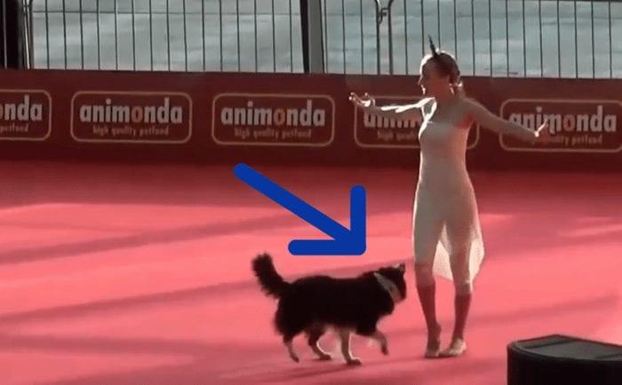 bailarina perro copia 700x434