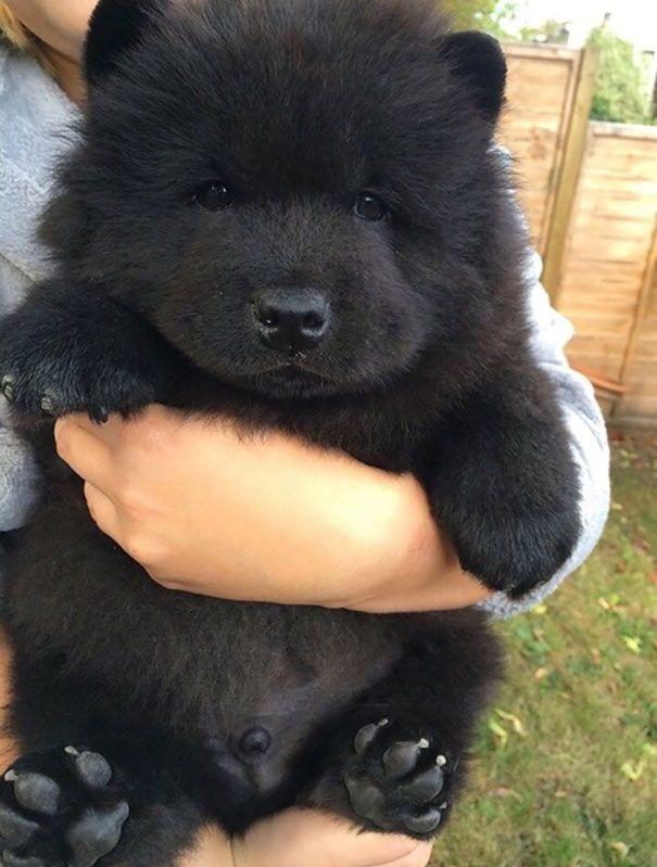 cachorros-osos03
