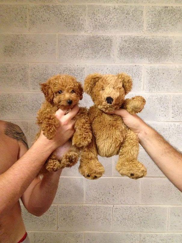 cachorros-osos05