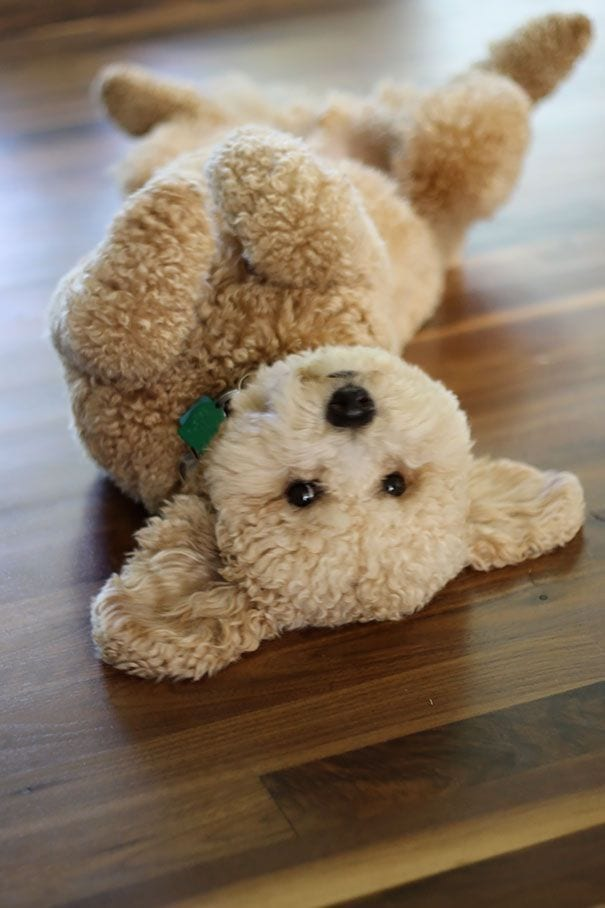 cachorros-osos08