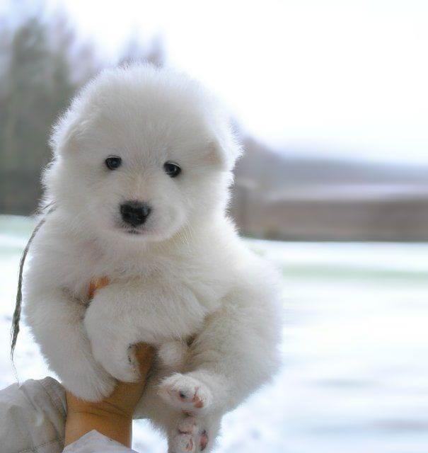 cachorros-osos09