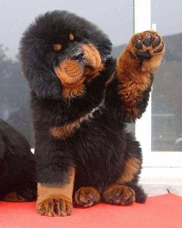 cachorros-osos10