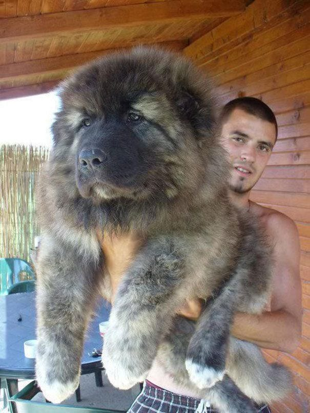 cachorros-osos12