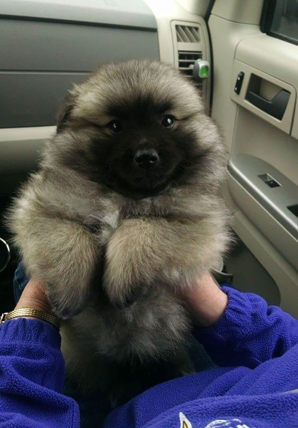 cachorros-osos13