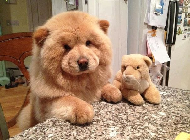 cachorros-osos14