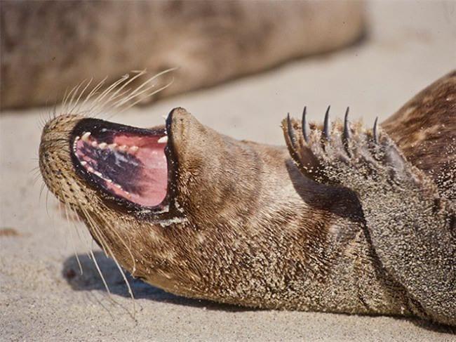 focas-riendo-14