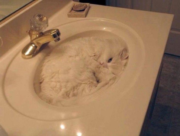 gatos-durmiendo-05