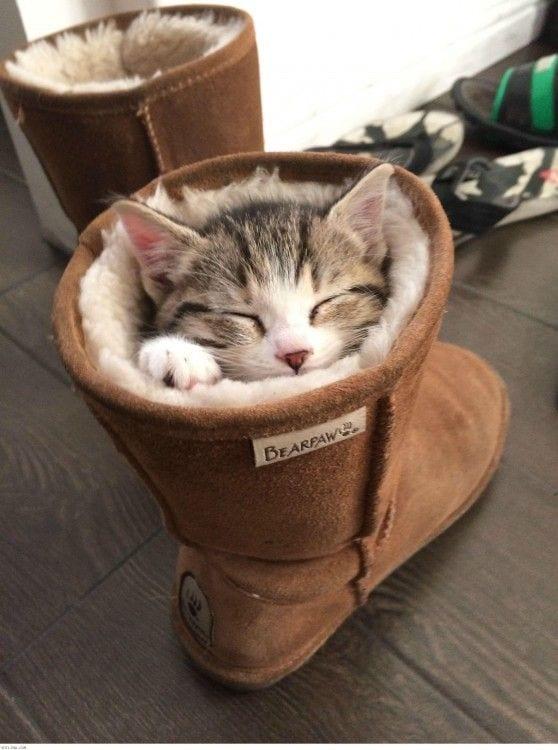 gatos-durmiendo-06