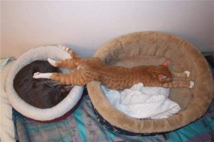 gatos durmiendo 10