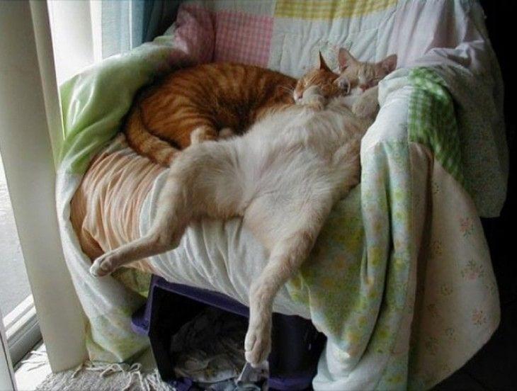 gatos-durmiendo-14