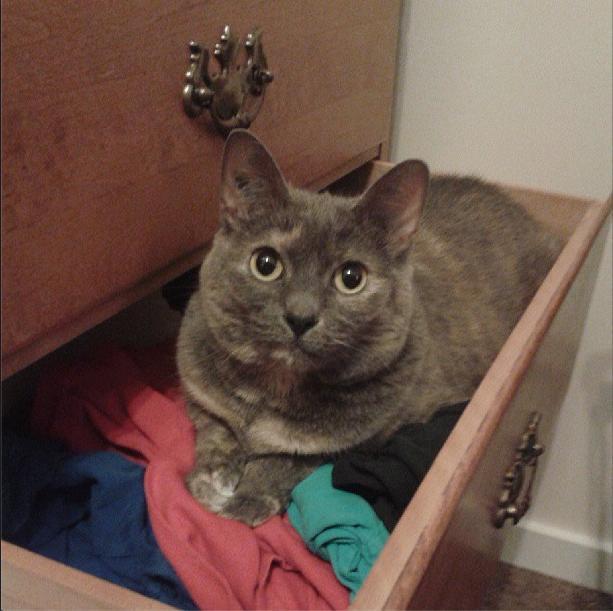 gatos-invasores01