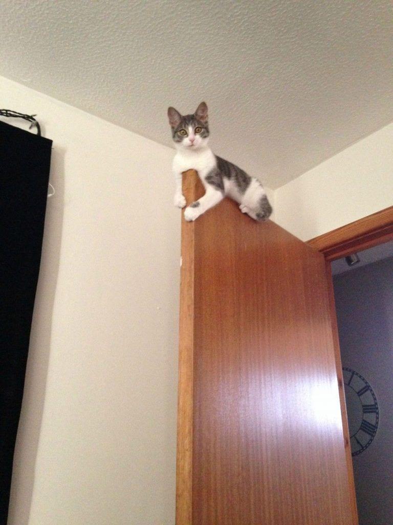 gatos-invasores03