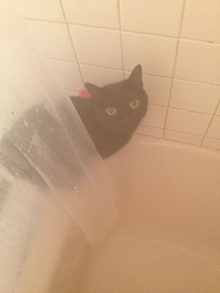gatos-invasores04