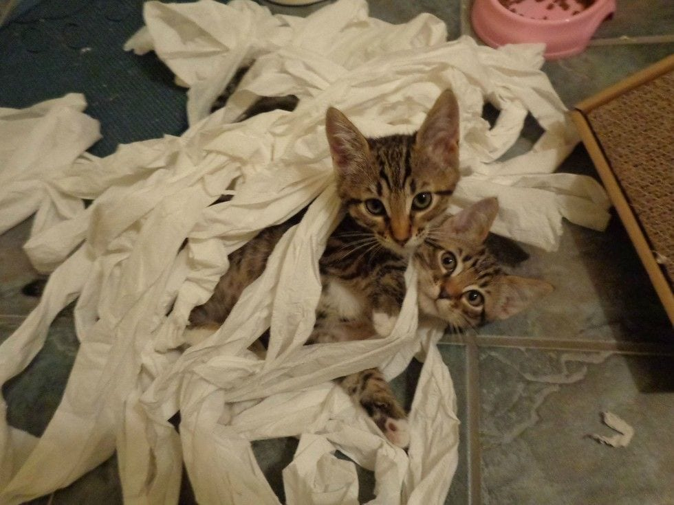 gatos-invasores08