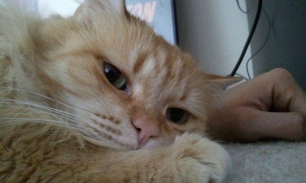 gatos-invasores12