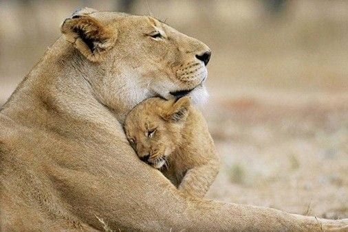 maternidad animales 12