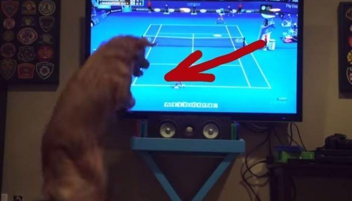 perro tenis