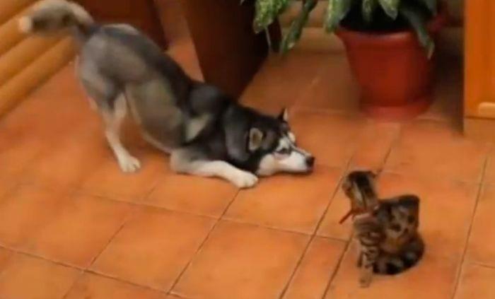 perros jugar gatos