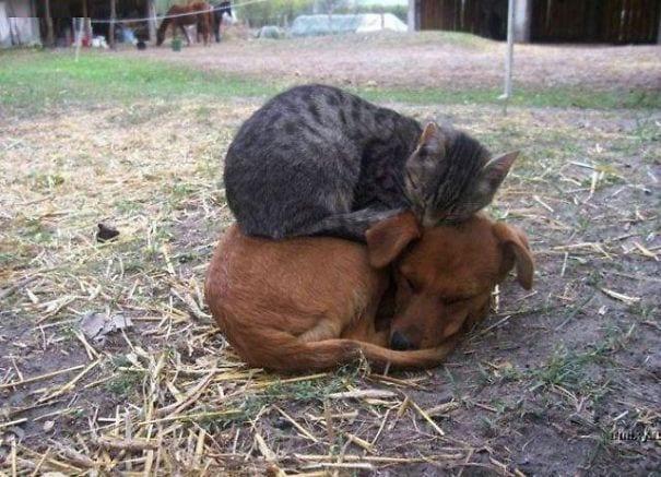 perros_gatos_durmiendo_1
