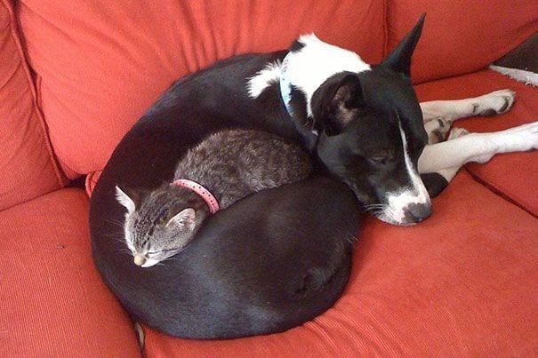 perros_gatos_durmiendo_10