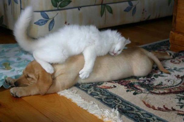 perros_gatos_durmiendo_11