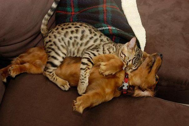 perros gatos durmiendo 12