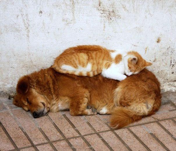 perros_gatos_durmiendo_15