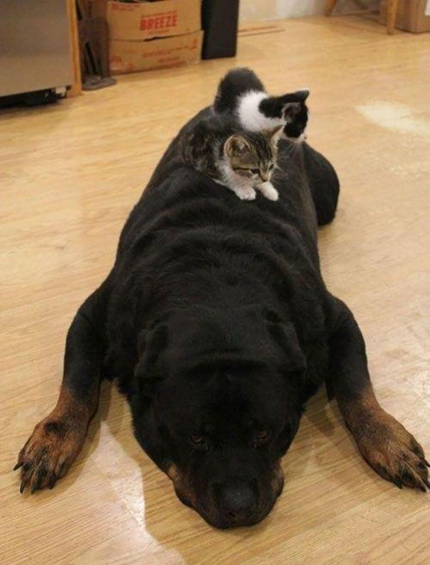 perros_gatos_durmiendo_16