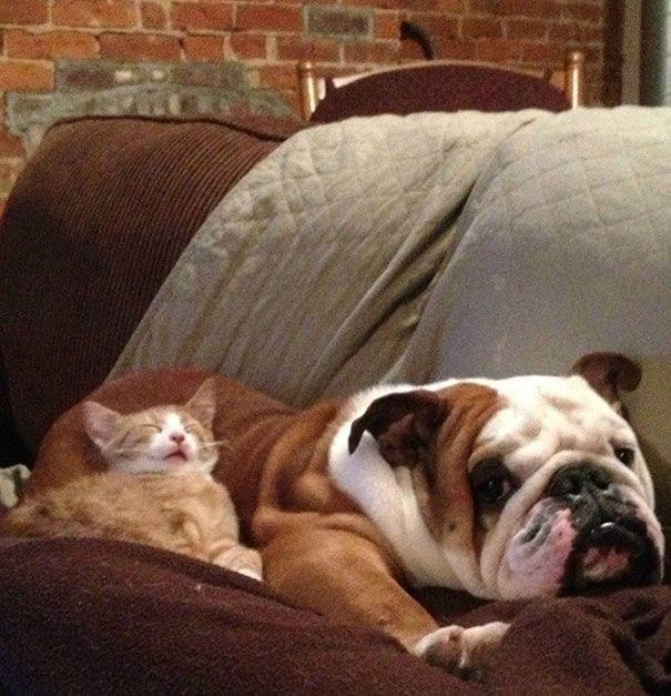 perros_gatos_durmiendo_17