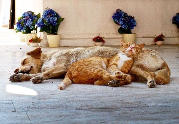 perros_gatos_durmiendo_18