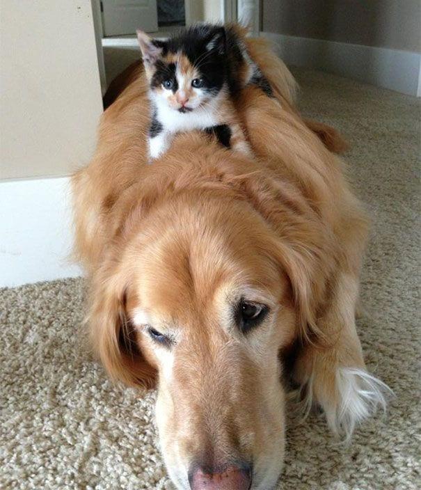 perros_gatos_durmiendo_19