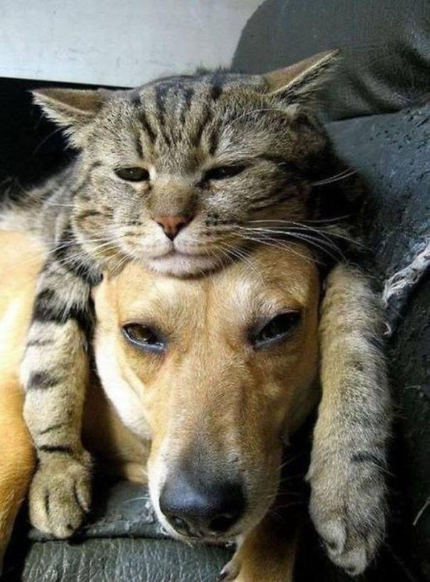perros_gatos_durmiendo_2