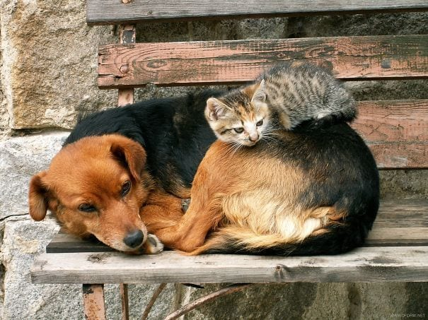 perros_gatos_durmiendo_20