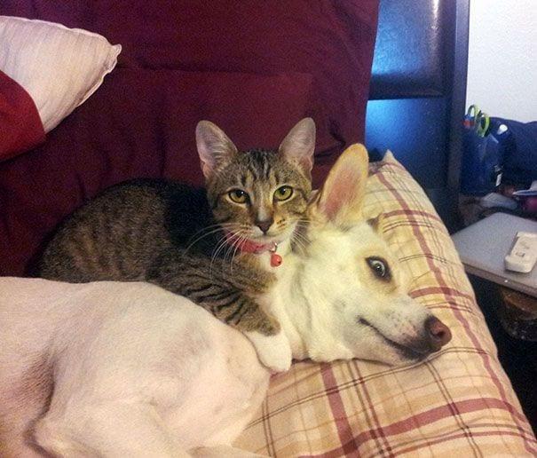 perros_gatos_durmiendo_21