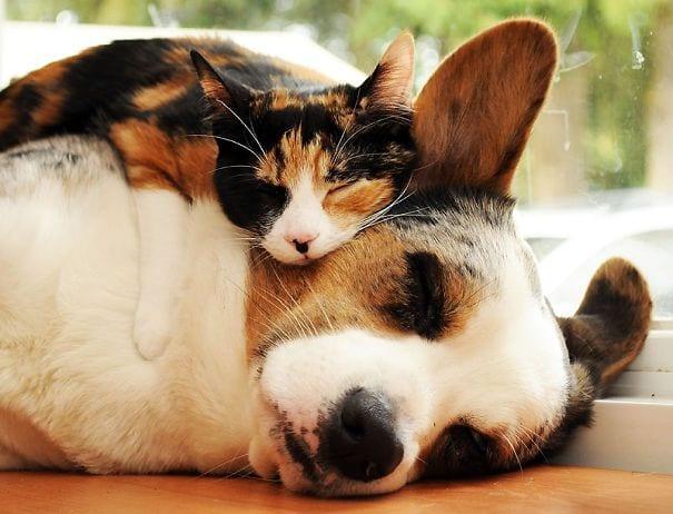 perros_gatos_durmiendo_22