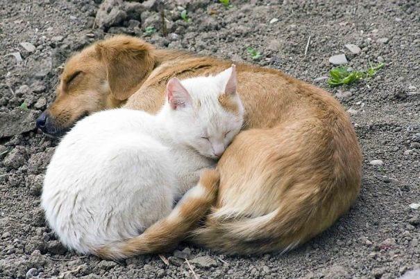 perros_gatos_durmiendo_23