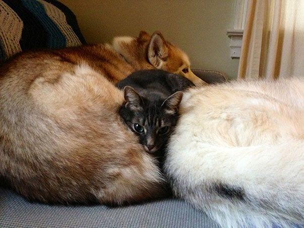 perros_gatos_durmiendo_24