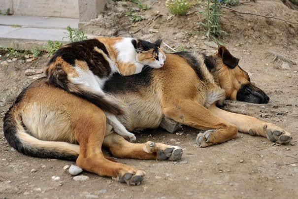perros_gatos_durmiendo_25