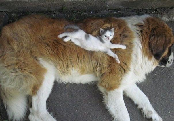 perros_gatos_durmiendo_3
