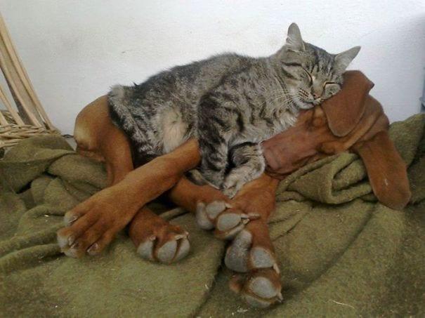 perros_gatos_durmiendo_4