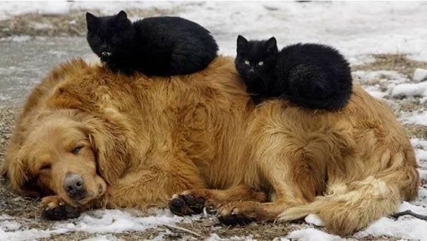 perros_gatos_durmiendo_8