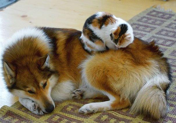 perros_gatos_durmiendo_9