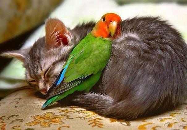 animales durmiendo 07