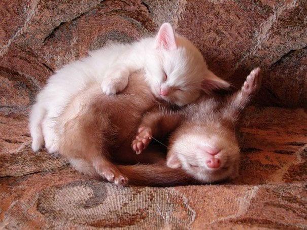 animales-durmiendo-08
