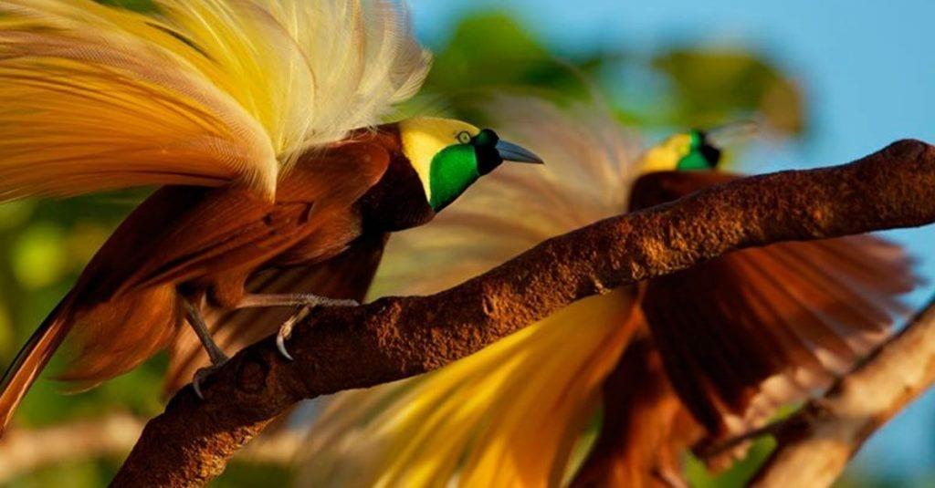 aves paraiso naturaleza