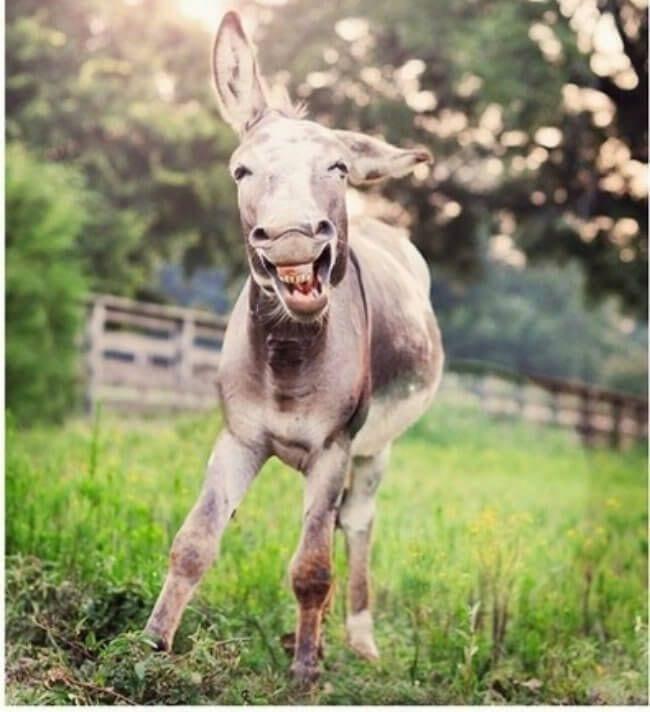 burros mini 11
