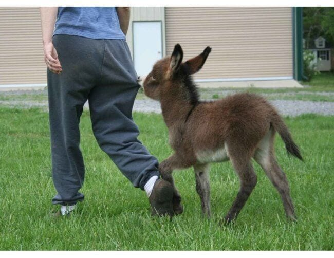 burros mini 14