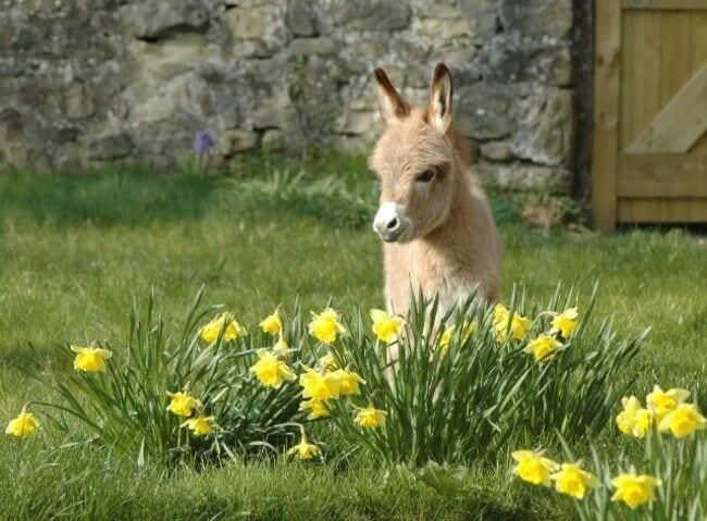 burros mini 15